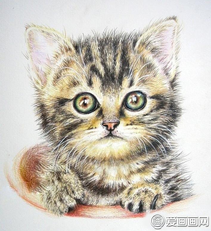 彩色铅笔绘画可爱的小猫咪详细图文步骤11:添加胡须,可爱的小猫咪绘画